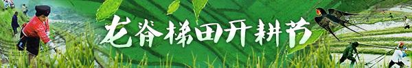 直播回顾:龙脊梯田开启一年最美模式,寨子里惊现最美寨花